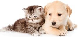 Dog-and-cat-wallpaper-download